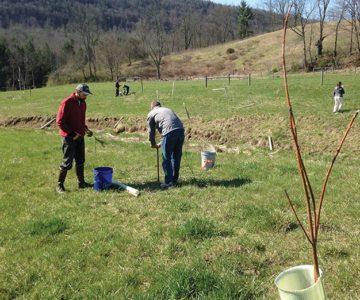 volunteers planting trees in a field